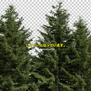 針葉樹の素材_No,01