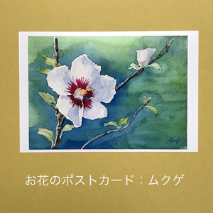 ムクゲ:お花のポストカード2枚セット