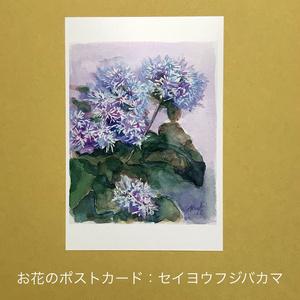 セイヨウフジバカマ:お花のポストカード2枚セット