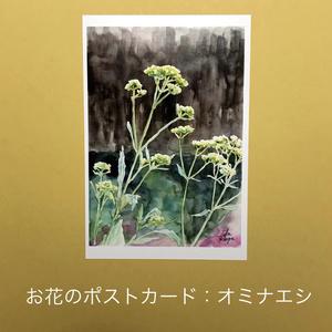 オミナエシ:お花のポストカード2枚セット