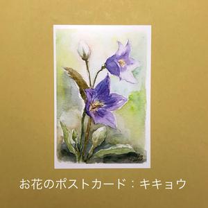 キキョウ:お花のポストカード2枚セット