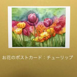 チューリップ:お花のポストカード2枚セット