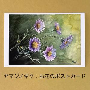 ヤマジノギク:お花のポストカード2枚セット
