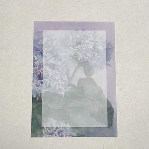 お花のメモ用紙:セイヨウフジバカマ 30枚セット
