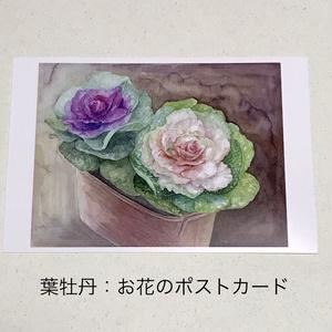 桜・葉牡丹・紫陽花:お花のポストカード3枚セット