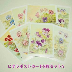 ビオラポストカード各種