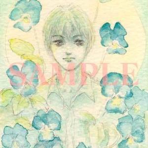 ビオラ妖精ポストカード3枚セット(春の日の華と咲く・この想いの向かう先・碧き月の光満つ各1枚)
