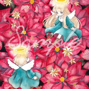 ポストカード:Poinsettia