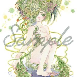 ポストカード:Les plantes