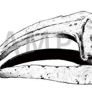 「鯨の墓」