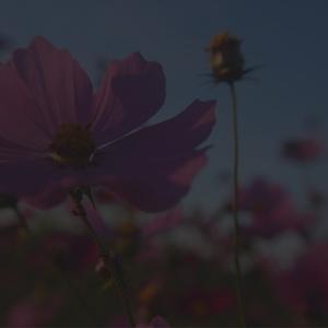 美しい花の画像