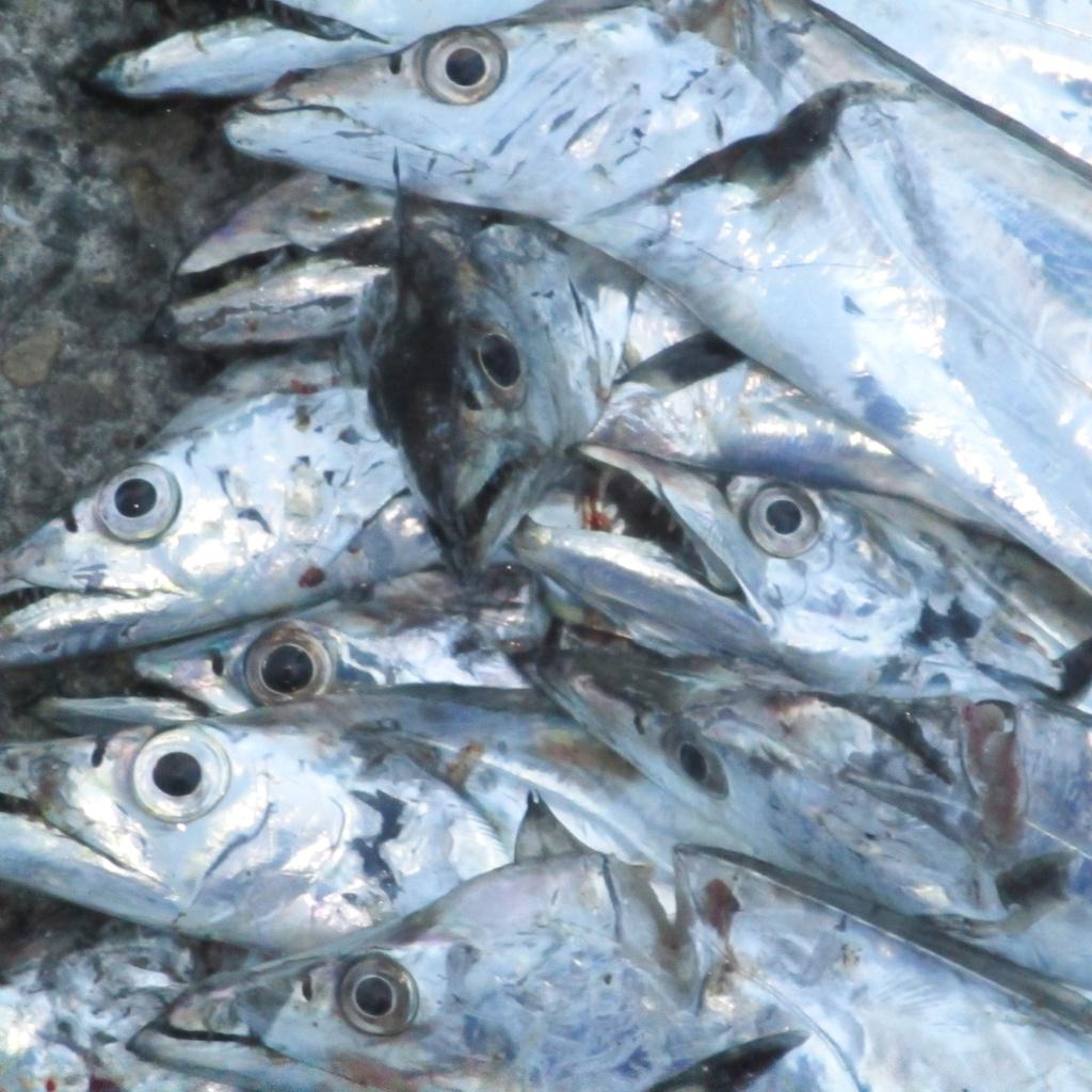 太刀魚〜ショート・ショート作品集 1 (平林タケル) The Cutlass Fish -  Petit Piano Pieces by Takeru Hirabayashi
