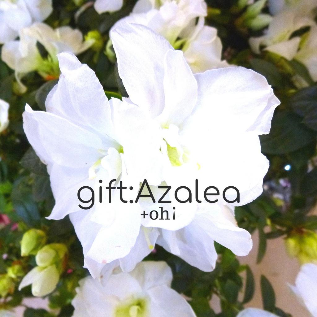 gift:Azalea