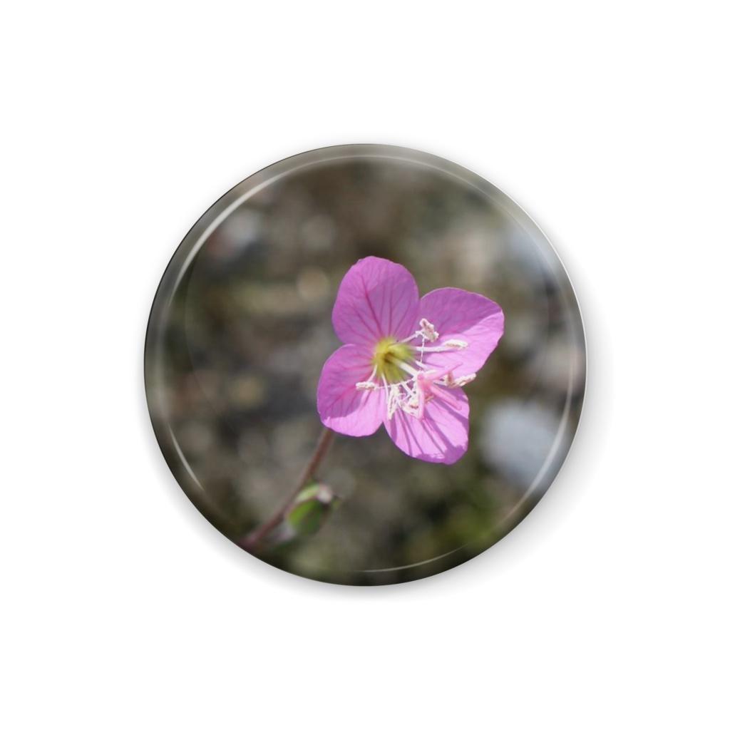 小さな小さな花でした
