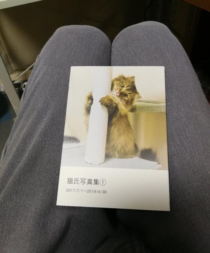 猫氏写真集①