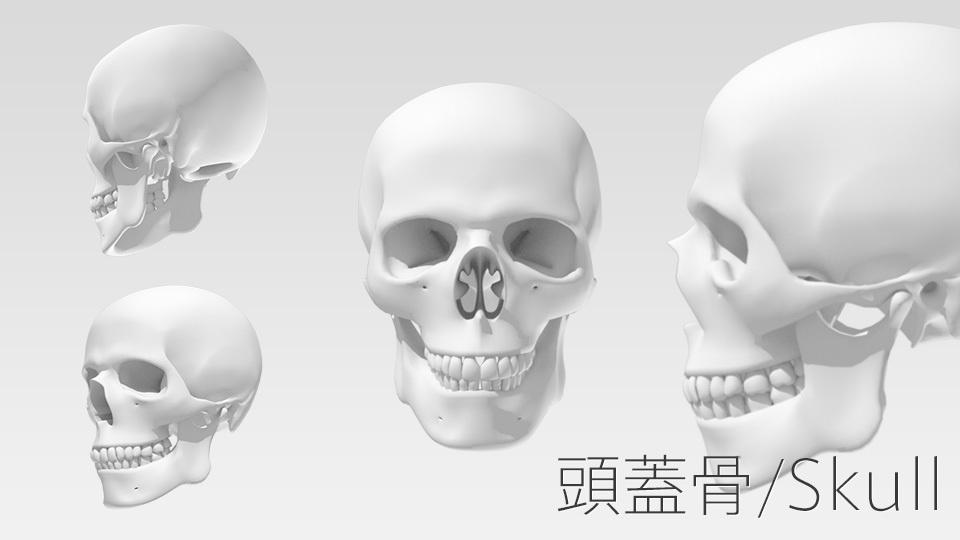 3Dデータ:頭蓋骨/Skull